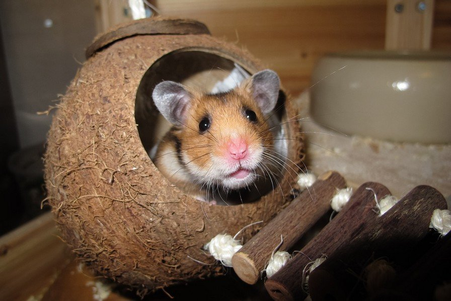 How To Take Care Of A Hamster For Beginners