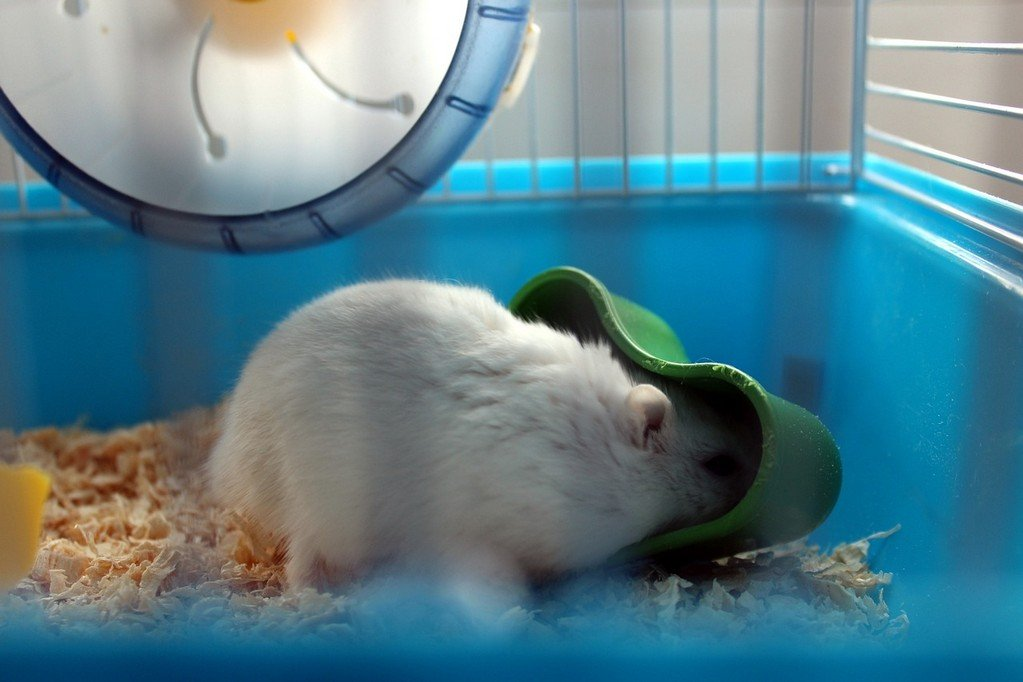 How To Choose The Best Big Hamster Cage