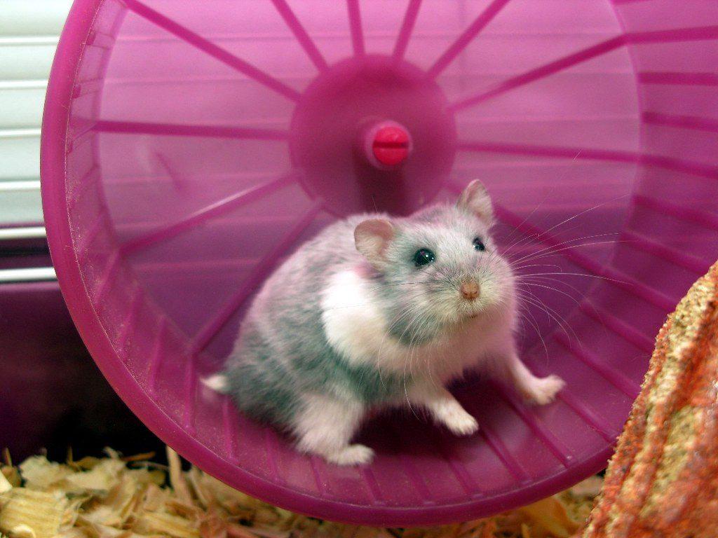 Best hamster wheels
