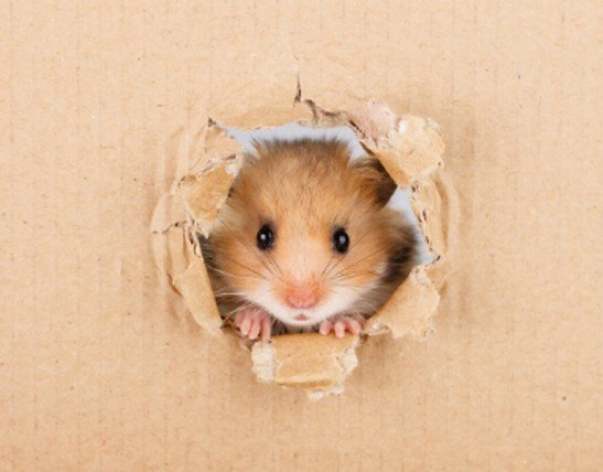 Hamster Care - cover