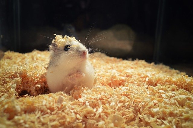 Supplies for Hamsters Basic Needs