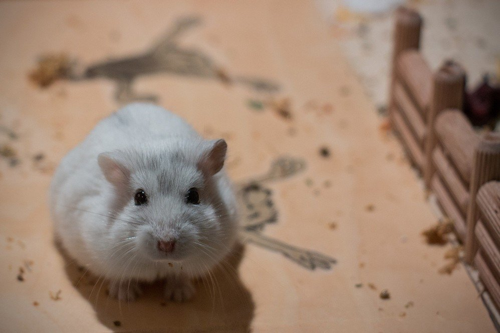 Best Gifts For Hamsters On National Pet Day