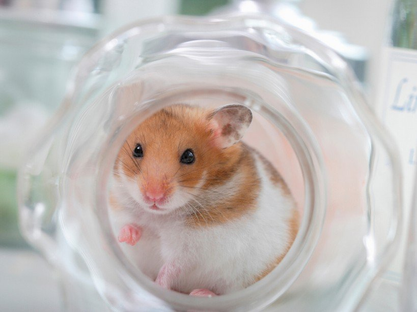Best Hamster Dens How to choose the best hamster hideout (2)