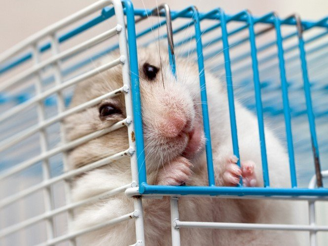 How To Stop Your Hamster From Chewing Bar Cage Safely