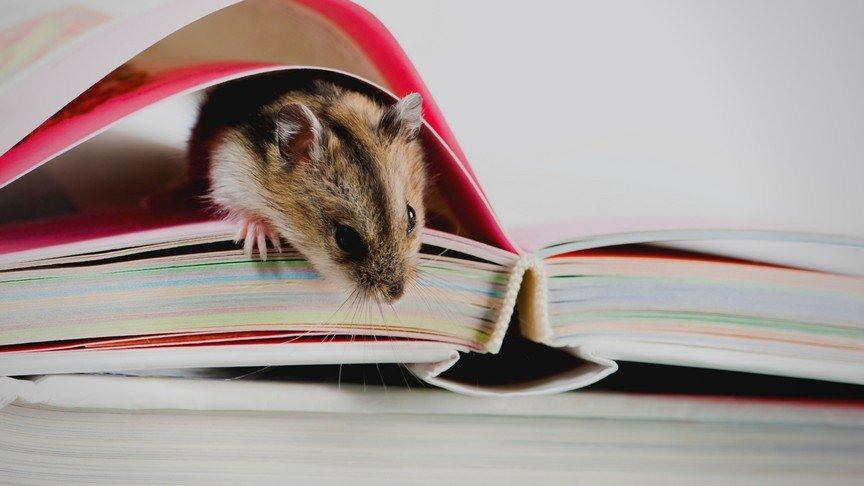 Best Hamster Story Books for Kids