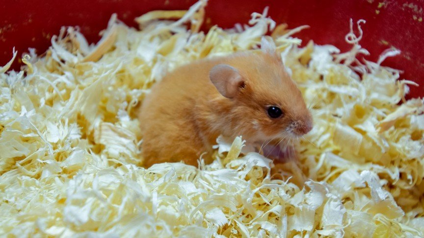 Best Hamster Travel Cage and Hamster Vet Carrier