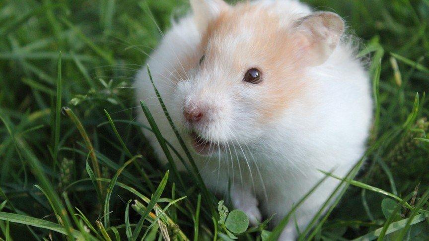 best hamster playpen
