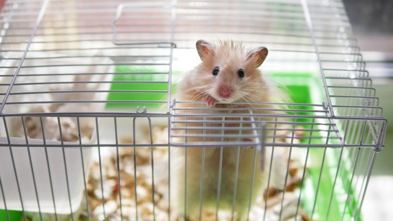 Common Mistakes New Hamster Owner Make