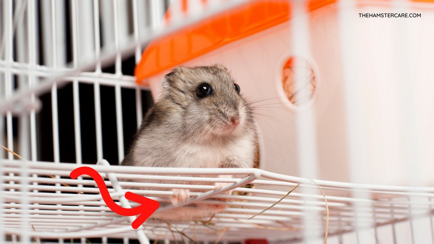 COMPILATION OF BAD HAMSTER CAGES TO AVOID
