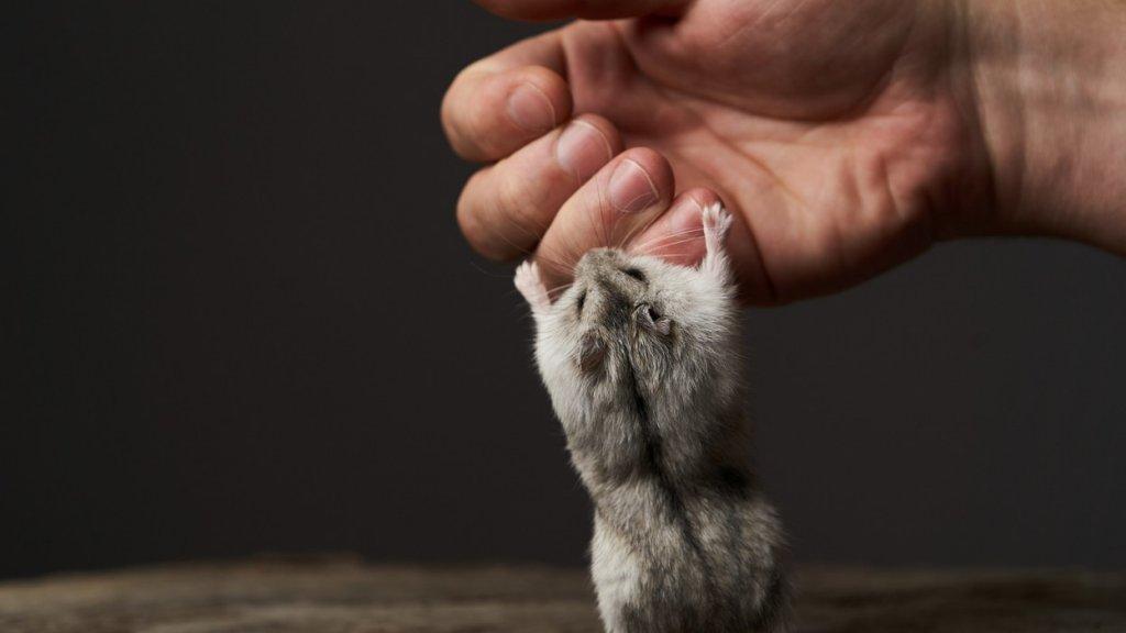 why hamster bite