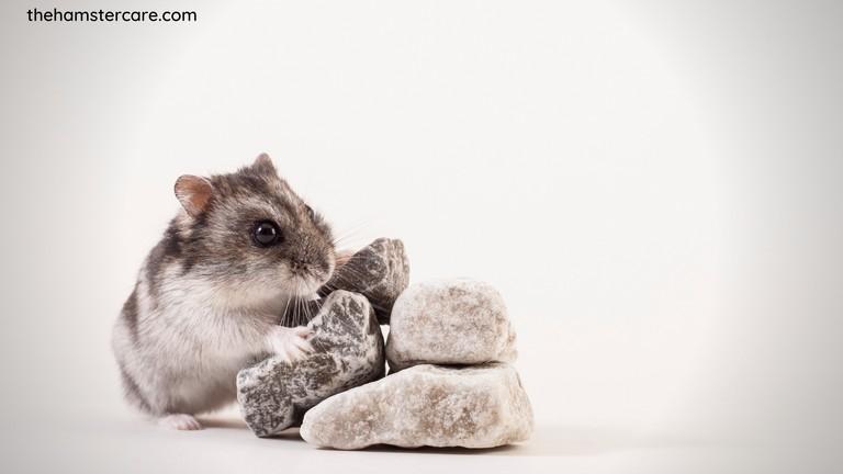 Hamster nail care