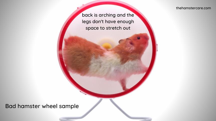 Why Do Hamsters Run on Wheels