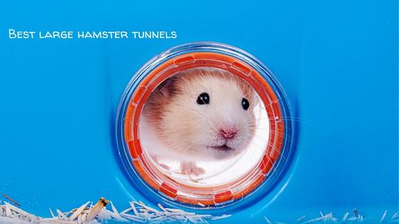 Best Large Hamster Tunnels (1)