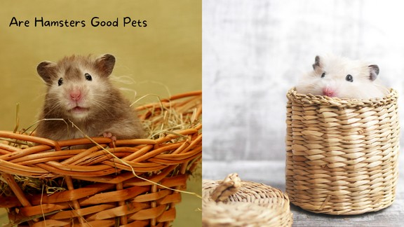 Are Hamsters Good Pets (