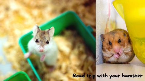 Travelling WithTravelling With a Hamster a Hamster