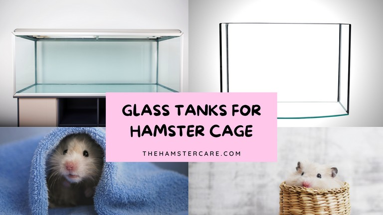 Glass Tank For Hamsters